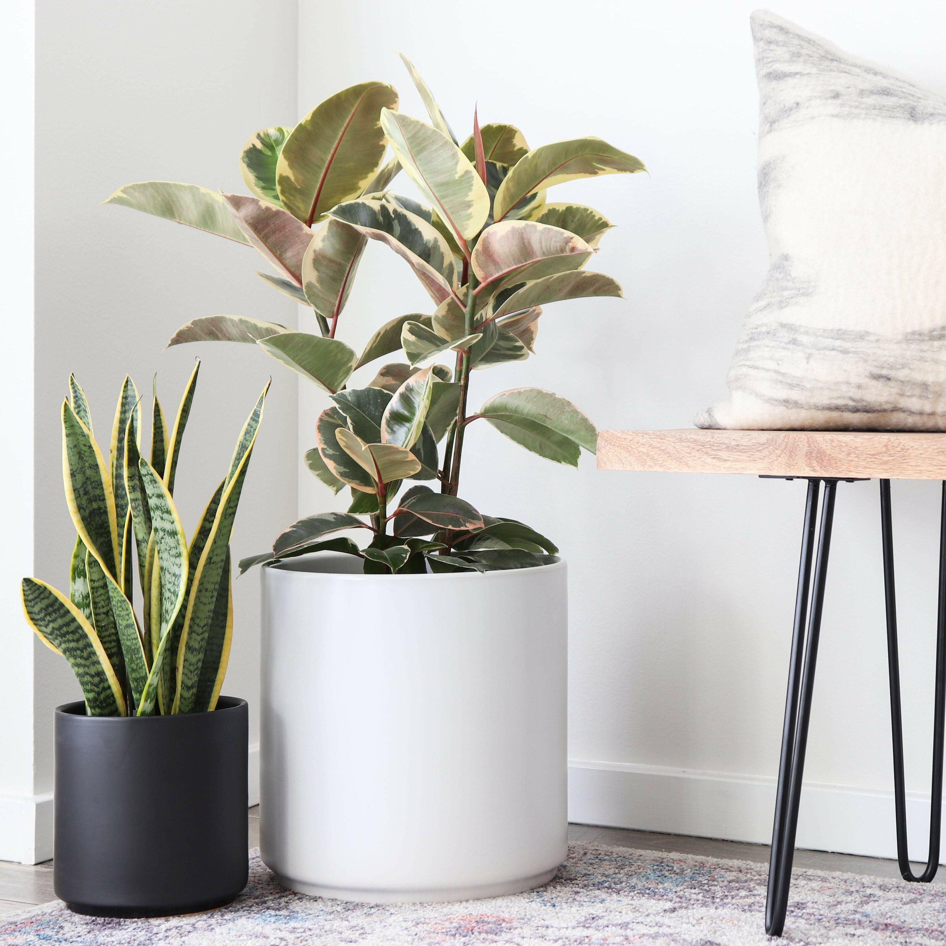 peach and pebble modern porcelain planter pots