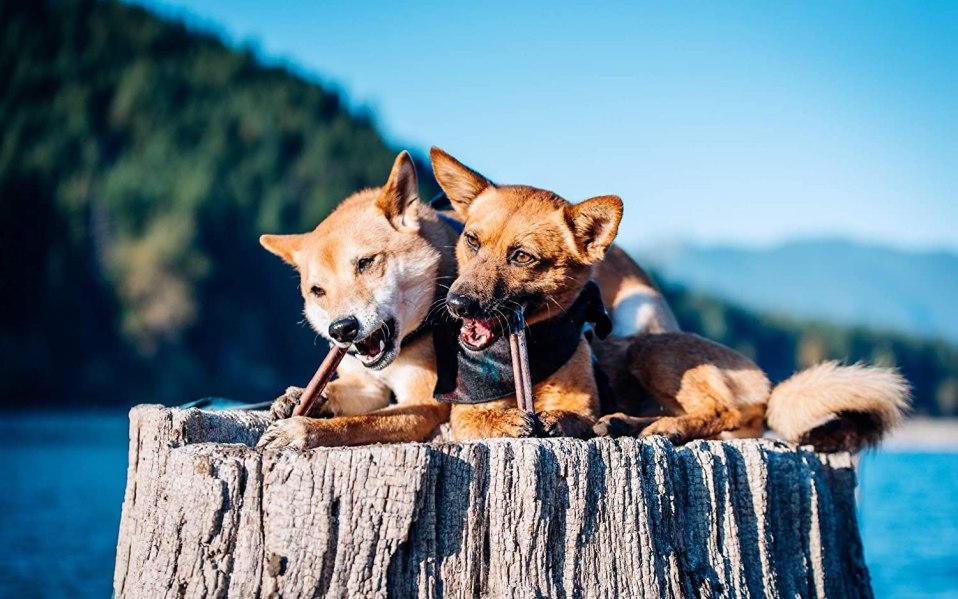 Best dog chews
