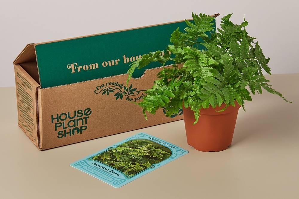 pet friendly box the house plant box