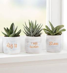plant of the month club