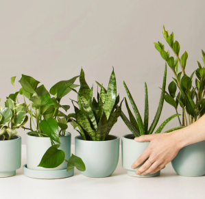 best plant subscription boxes plants for beginners