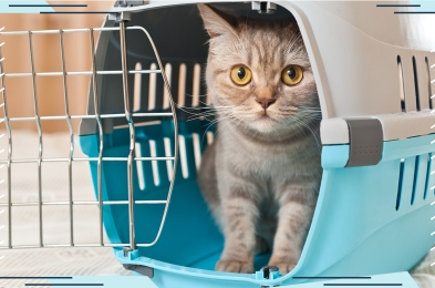 cat-carriers-featured