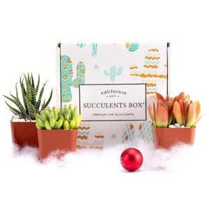 best plant subscription boxes succulents box