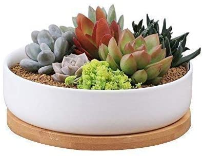 Binwen 6.3 inch Round Ceramic White Succulent Cactus Planter