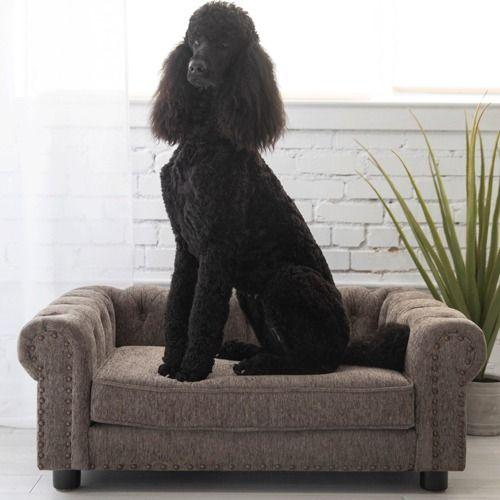 newton sofa dog