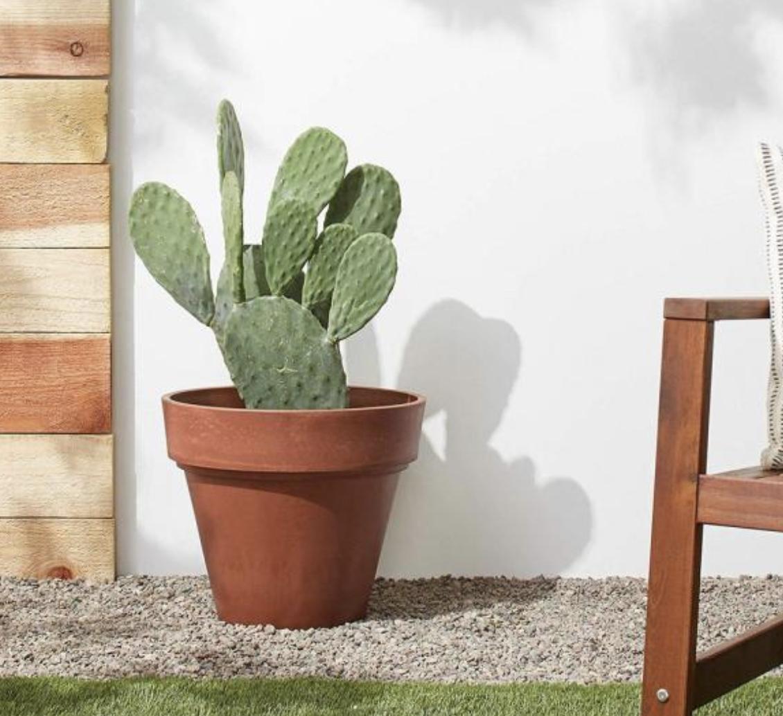 large terracotta planter pots