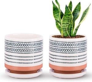 The Next Gardener Ceramic Planters