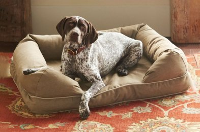 give your dog their very own place to chill out with one of these couches made for dogs