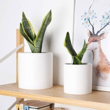 forget plastic, these ceramic pot planters are eco-friendly and stylish