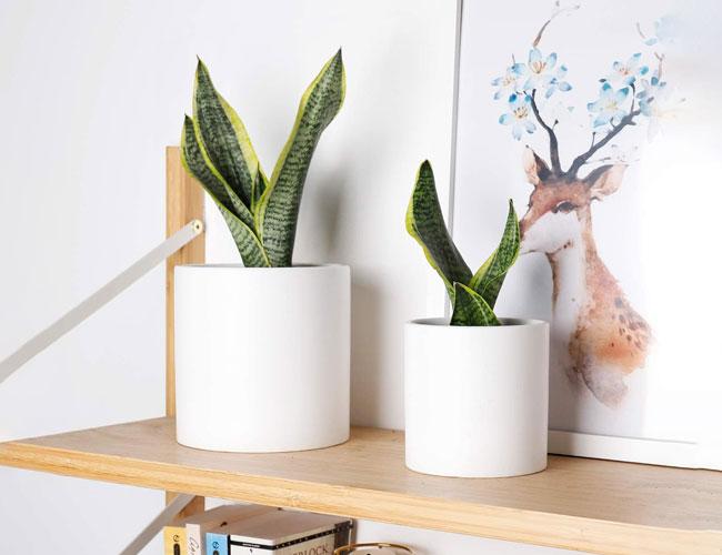 ceramic pots (planters)