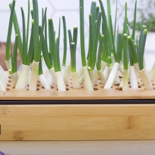green-onion-growing-kit-by-hamama