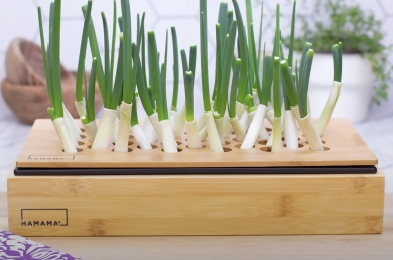 green-onion-growing-kit-by-hamama