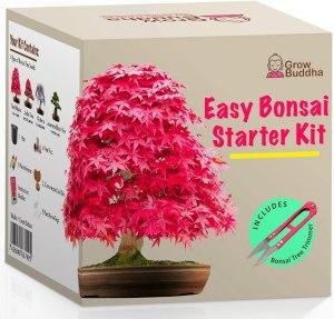 Grow Buddha bonsai tree kit