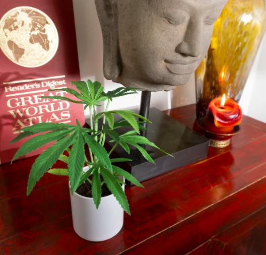 clone pot plant white pot
