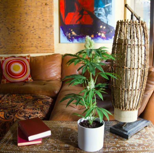 adult pot plant white pot