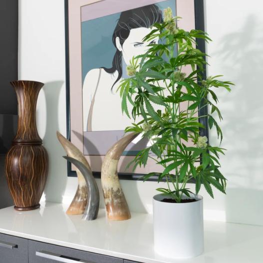 mother pot plant white pot