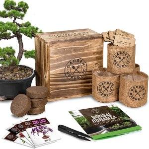 Garden republic bonsai tree kit