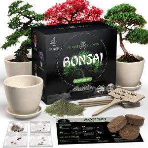 home grown bonsai tree kit