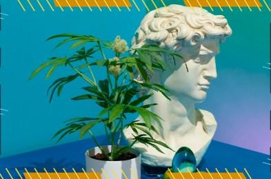 the-pot-plant