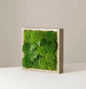 Mini Preserved Living Wall