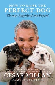cesar millan dog training book