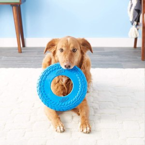 Nerf Dog rubber frisbee, best frisbees for dogs