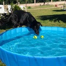 best-dog-pools