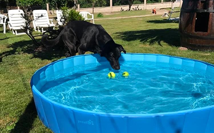 best dog pools