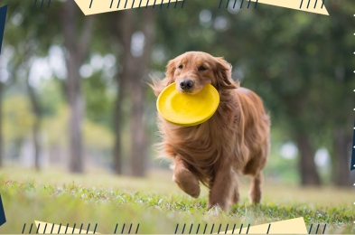 dog-frisbees-featured