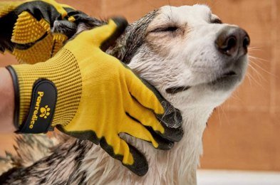 are you a cat or dog owner you need a pet grooming glove