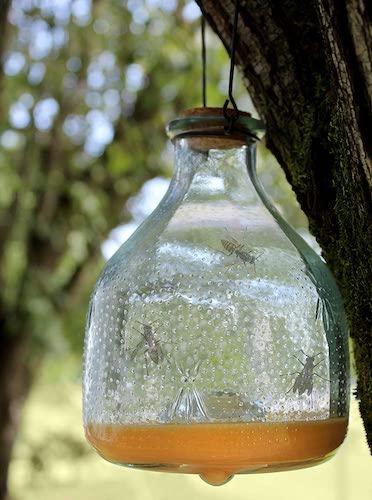 Darware Glass Wasp Traps