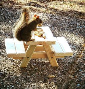 ILakeTheLife squirrel picnic table