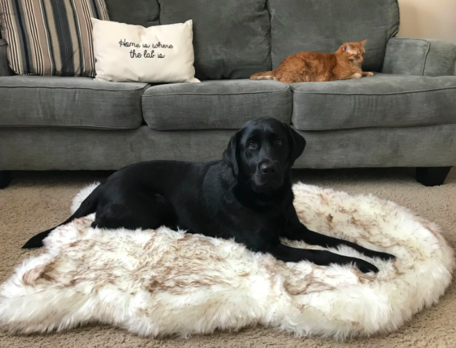 paw Faux Fur Orthopedic Dog Bed