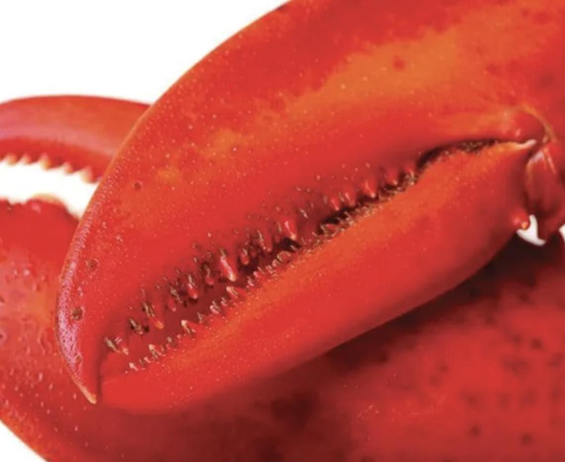 15 lb - 20 lb North Atlantic Live Lobster