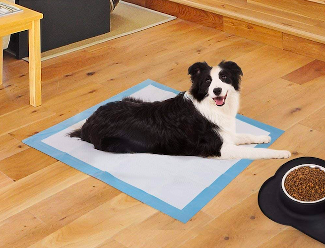BESTLE pee pad for dogs