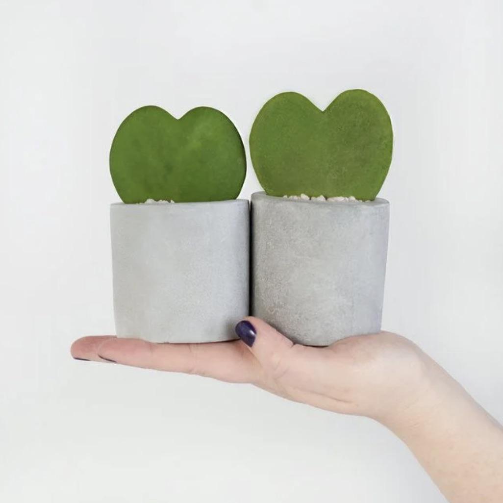 Heart mini succulents