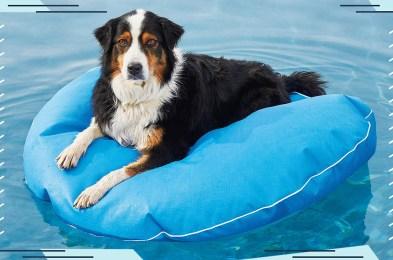 dog-pool-floats