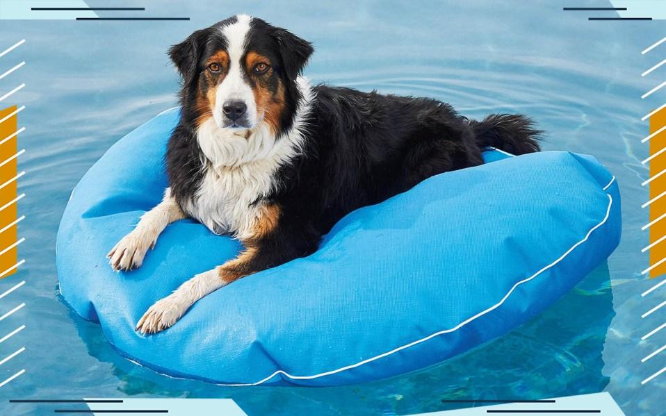collie on pool float