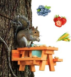 enclave woods squirrel picnic table