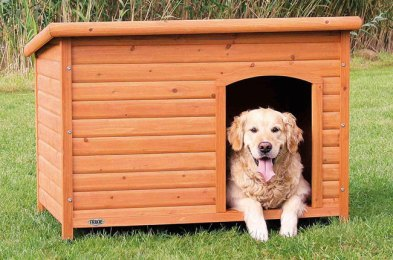 give your dog a home of their own with one of these dog houses
