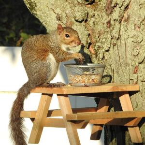 TractorBunkBeds squirrel picnic table
