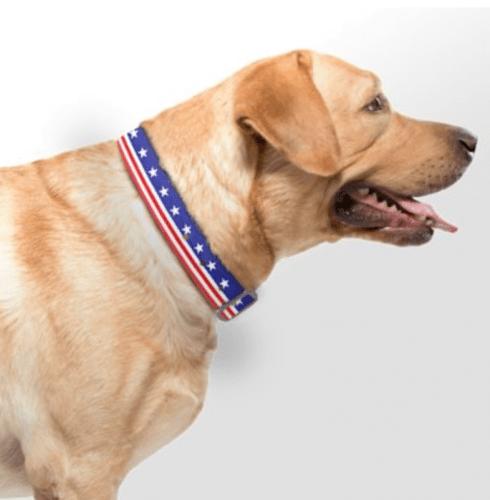 C4 Americana Waterproof Collar