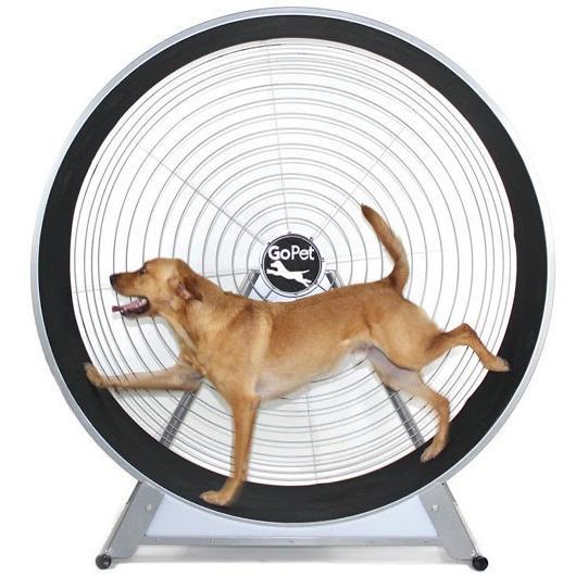 treadwheel for dogs