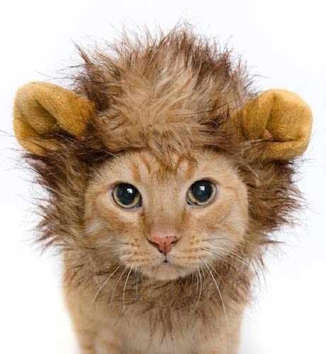 Pet Krewe Lion Mane Costume for Cats