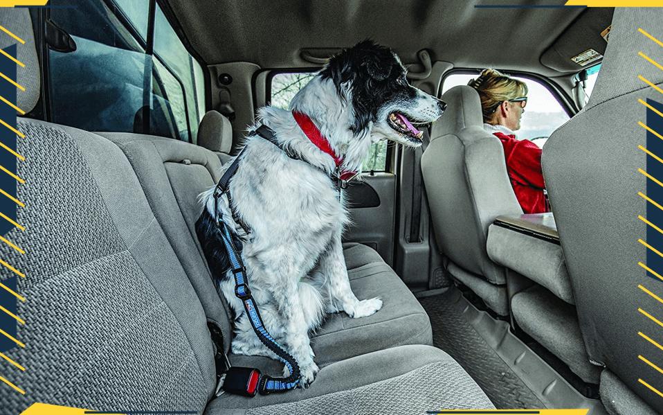 best dog safety belts