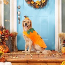 barks and boos: the best halloween 2021 costumes for dogs