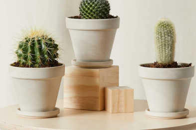 bloomscape-how-to-buy-cactus-online