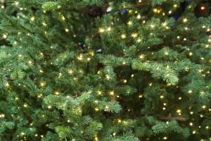 hanging Christmas lights on trees, how to hang Christmas lights