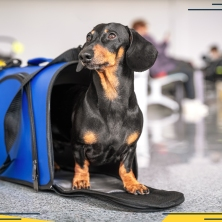 how-to-fly-with-a-dog-featured