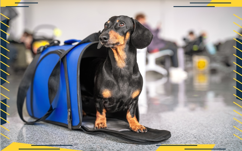 how to fly with a dog